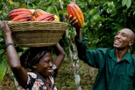 cocoafarmers